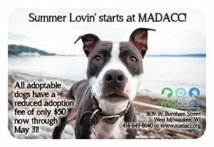 Summer Lovin dog